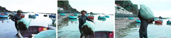 Vẻ đẹp của rong mơ biển trong mùa thu hoạch ảnh 27