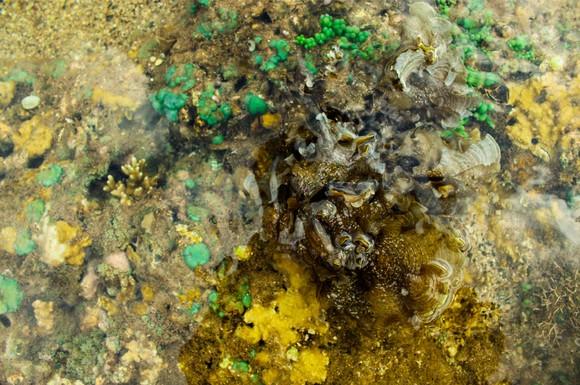 Vẻ đẹp của rong mơ biển trong mùa thu hoạch ảnh 32