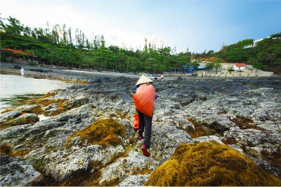Vẻ đẹp của rong mơ biển trong mùa thu hoạch ảnh 40