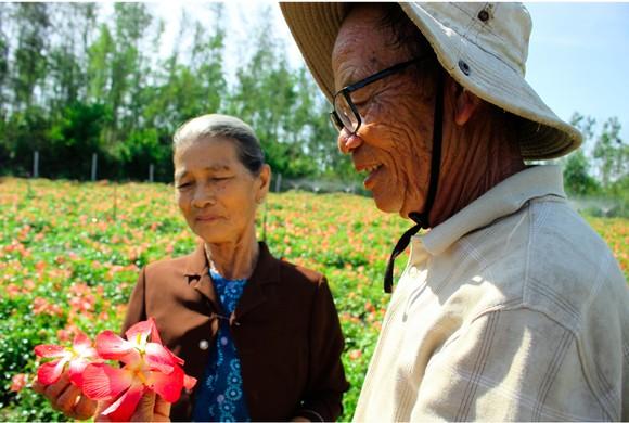 Sâm Bố Chính nở hoa rực rỡ trên đất Quảng Ngãi ảnh 25