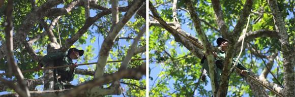 Hà Tĩnh vào mùa thu hoạch quả trám đen ảnh 21