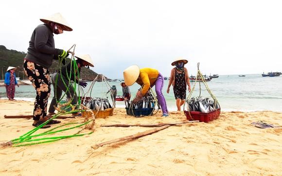 Biển gần bờ xuất hiện nhiều đàn cá, ngư dân Bình Định trúng lớn ảnh 3
