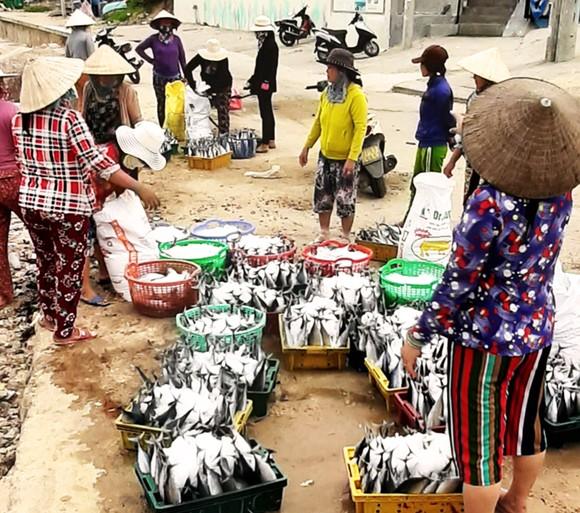 Biển gần bờ xuất hiện nhiều đàn cá, ngư dân Bình Định trúng lớn ảnh 7