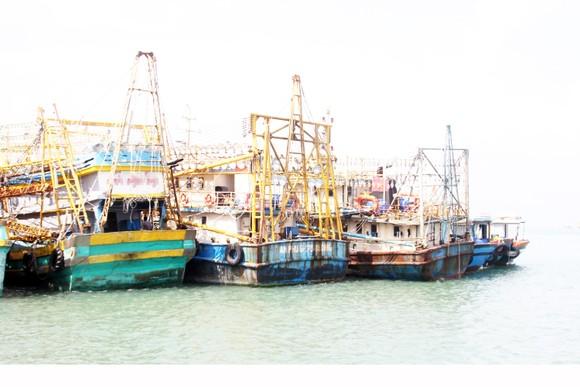 Vẫn còn nhiều tàu cá 67 chưa mua được bảo hiểm để ra khơi ảnh 1