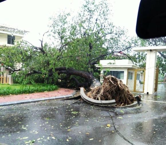 Những thiệt hại ban đầu của cơn bão số 12 ảnh 15