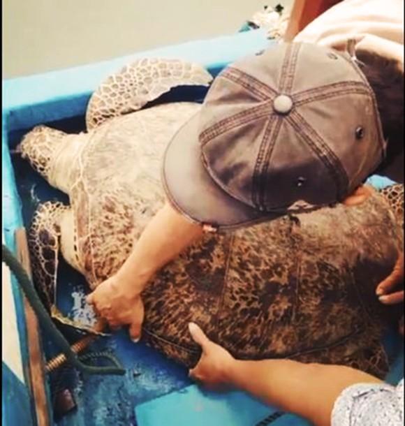 Thả một cá thể rùa xanh nặng 120kg về biển ảnh 2