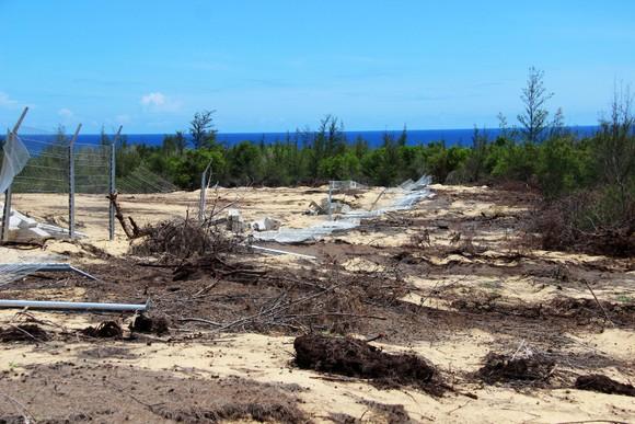 Nhiều héc ta rừng phòng hộ ven biển Bình Định bị san phẳng ảnh 2