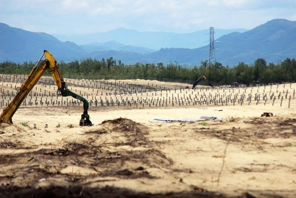 Nhiều héc ta rừng phòng hộ ven biển Bình Định bị san phẳng ảnh 15