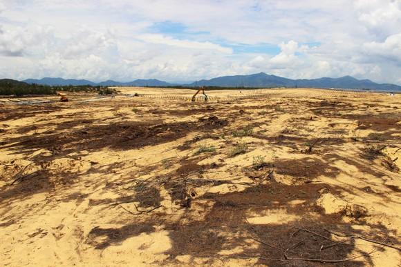 Nhiều héc ta rừng phòng hộ ven biển Bình Định bị san phẳng ảnh 1
