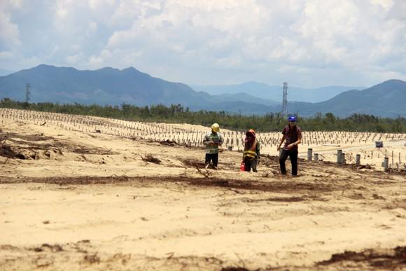 Nhiều héc ta rừng phòng hộ ven biển Bình Định bị san phẳng ảnh 18