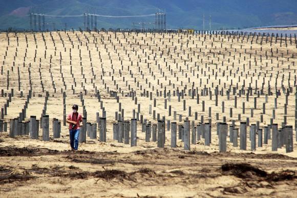 Nhiều héc ta rừng phòng hộ ven biển Bình Định bị san phẳng ảnh 13