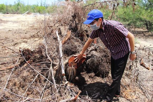 Nhiều héc ta rừng phòng hộ ven biển Bình Định bị san phẳng ảnh 11