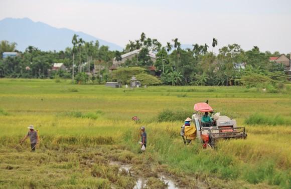 Duyên hải Nam Trung Bộ và Tây Nguyên vẫn đang là vùng trũng về xây dựng nông thôn mới ảnh 3