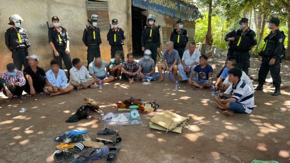 Tụ điểm đánh bạc dưới hình thức đá gà ăn thua bằng tiền ở vườn cây ăn trái tại xã An Thái Trung, huyện Cái Bè. Ảnh: NGỌC PHÚC
