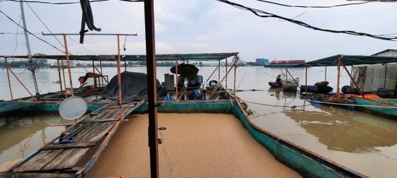 Sà lan tông chìm 2 bè cá trên sông Tiền ảnh 3