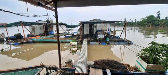 Sà lan tông chìm 2 bè cá trên sông Tiền ảnh 1