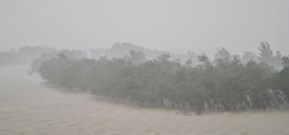 Quảng Bình mưa trắng trời, Huế cây cối ngã đổ ảnh 8