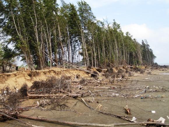 Thiên tai ở Nam bộ gây thiệt hại hơn 315 tỷ đồng ảnh 1