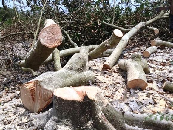Hàng ngàn ha vườn cây đặc sản ở ĐBSCL bị thiệt hại do hạn mặn ảnh 1