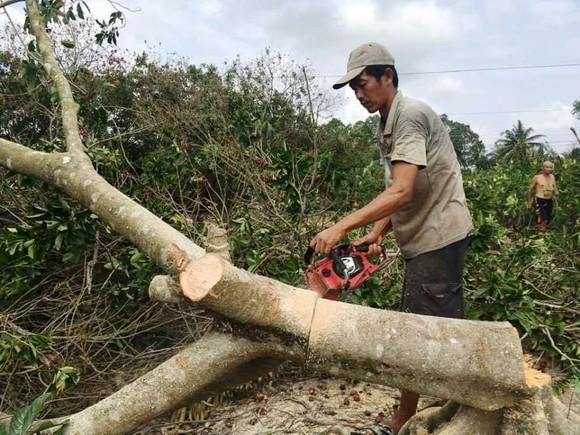 Hàng ngàn ha vườn cây đặc sản ở ĐBSCL bị thiệt hại do hạn mặn ảnh 2