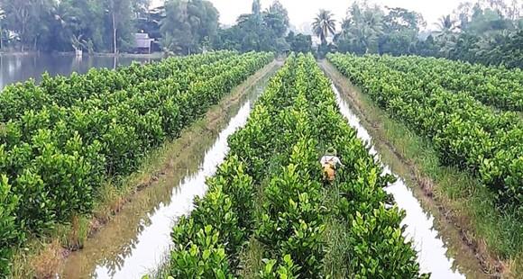 Phát triển thêm 450.000ha trái cây và thủy sản ở ĐBSCL đến năm 2030 ảnh 1