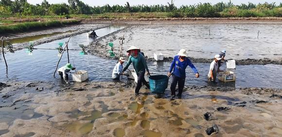 Phát triển thêm 450.000ha trái cây và thủy sản ở ĐBSCL đến năm 2030 ảnh 2