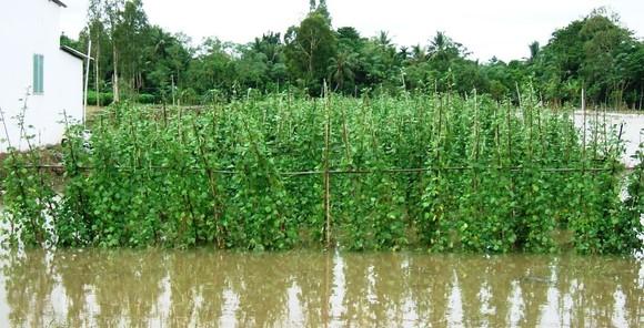 Kiên Giang: Hơn 1.790 nhà, 49 điểm trường bị ngập ảnh 2