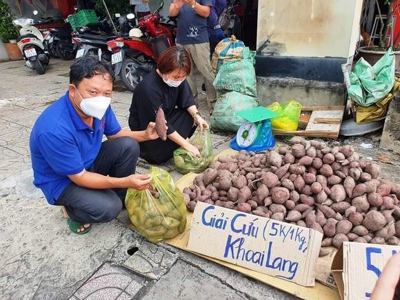 Đẩy mạnh tiêu thụ khoai lang cho nông dân với giá 3.000 - 5.000 đồng/kg ảnh 4