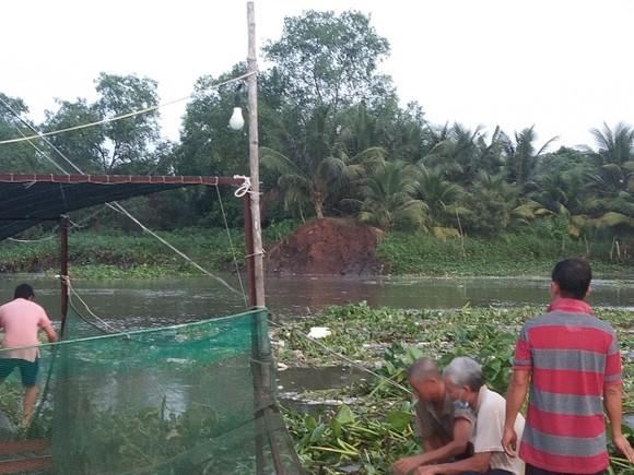 Sạt lở đất làm 4 tấn cá điêu hồng giống trôi ra sông ở Vĩnh Long ảnh 1