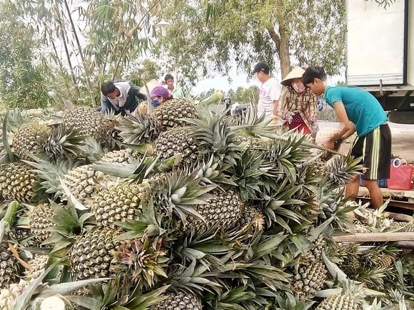 Nông dân thua lỗ vì nhiều loại trái cây rớt giá ảnh 5