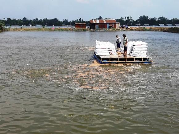 Xuất khẩu cá tra giảm mạnh trong tháng 8 và tháng 9 ảnh 2