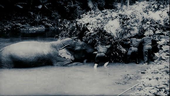 Ra mắt 22 tập phim tài liệu quy mô về chiến tranh giải phóng dân tộc, bảo vệ Tổ quốc ảnh 2