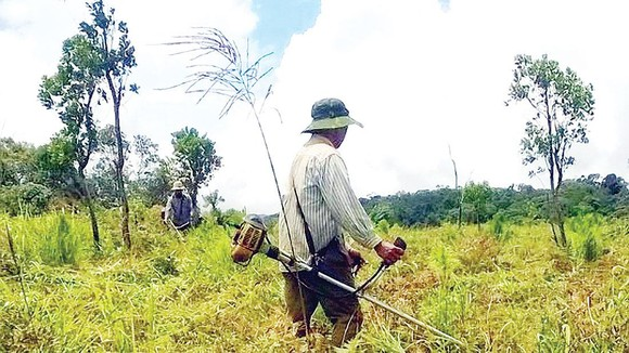 Công ty TNHH MTV Lâm nghiệp Kon Rẫy: Tập trung trồng và chăm sóc rừng trồng ảnh 2