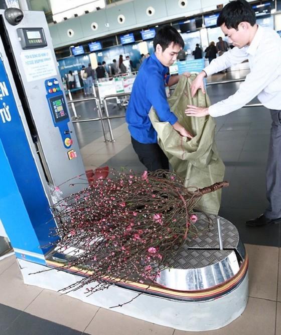 Passengers should wrap flowers into bundles with the size not exceeding 150x40x40 cm or 150cm x 40cm x 50cm. (Photo: SGGP)
