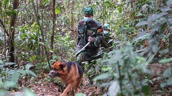 Border guards of Ha Tinh Province patrol along the border.