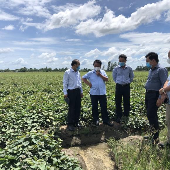 Tìm giải pháp căn cơ cho tiêu thụ nông sản ảnh 2