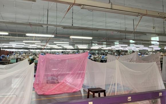 Nhiều doanh nghiệp sản xuất tại TPHCM nỗ lực bảo đảm '3 tại chỗ' ảnh 3