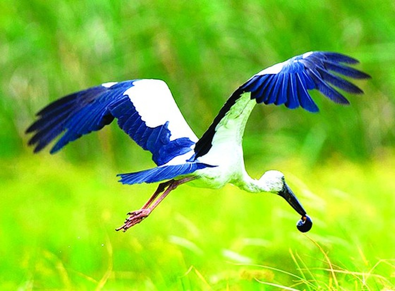 Enjoy fresh air in Lung Ngoc Hoang Nature Reserve ảnh 3