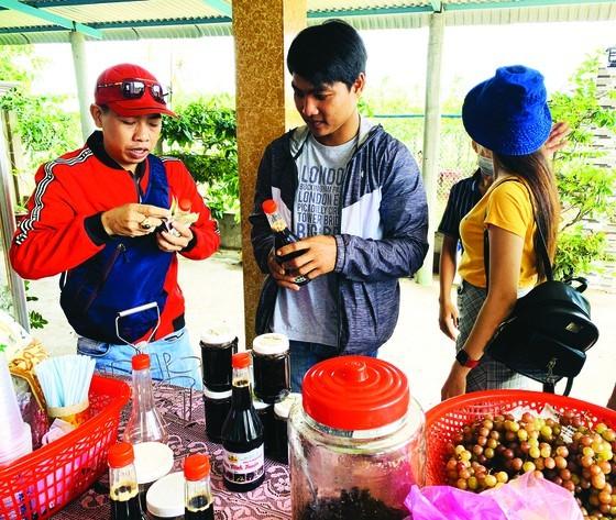 Two siblings start business by growing grape in Mekong Delta ảnh 3