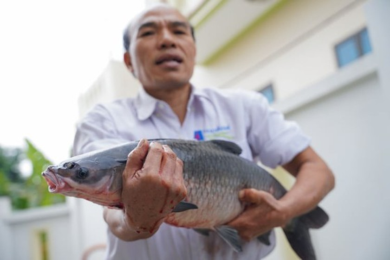 Vu Dai villagers start braising traditional fish for Tet holiday ảnh 3