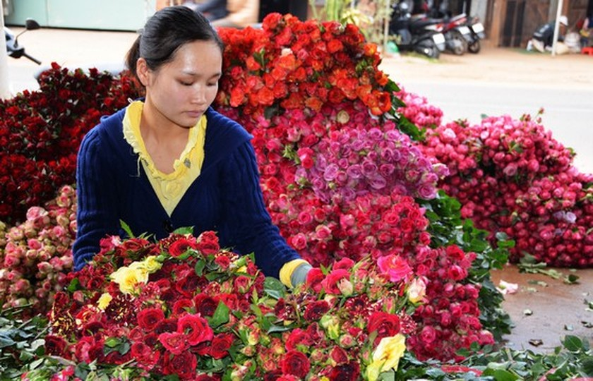 Low demand for flower, watermelon results in substantially lower prices ảnh 1