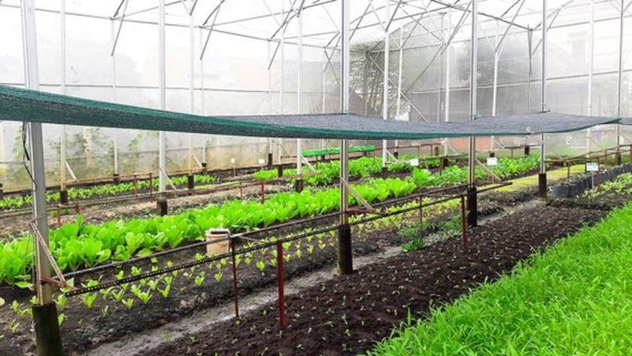 Australia helps Vietnam develop hi-tech agriculture ảnh 1