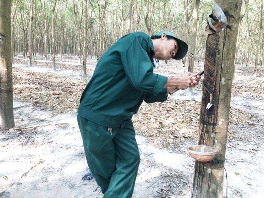 Vietnam's rubber export to US sees sharp surge ảnh 1