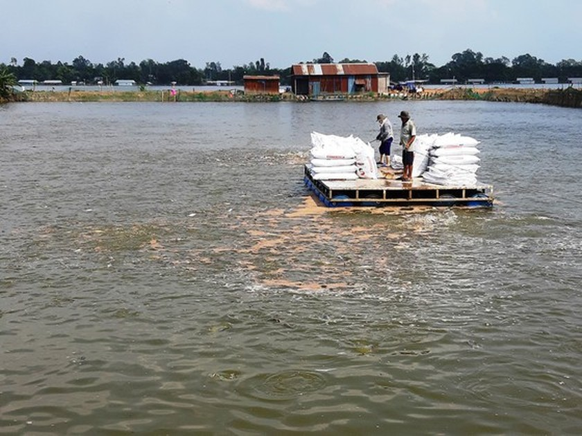 Tra fish exports drastically drop due to Covid-19 social distancing ảnh 1