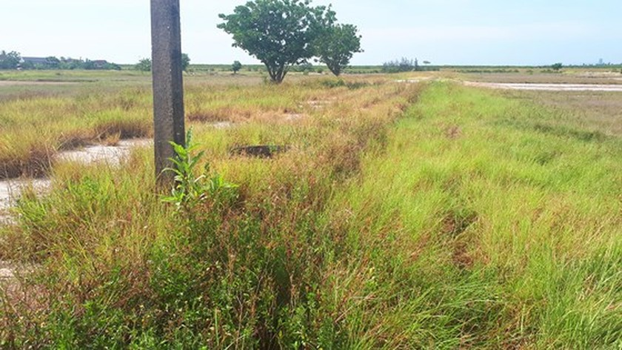 Ho Do salt field is deserted ảnh 14