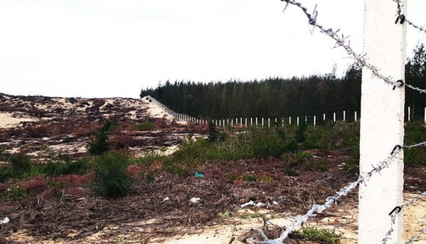 More than 140 hectares of forest destroyed in Binh Dinh  ảnh 2