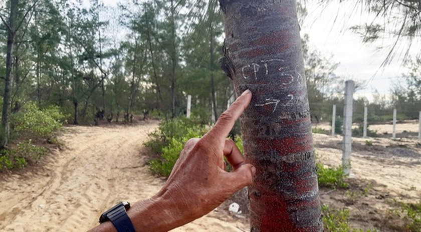 More than 140 hectares of forest destroyed in Binh Dinh  ảnh 3