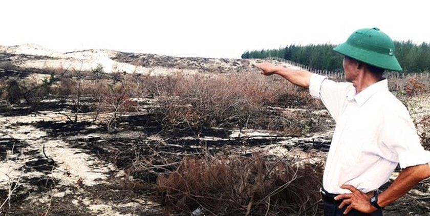More than 140 hectares of forest destroyed in Binh Dinh  ảnh 6