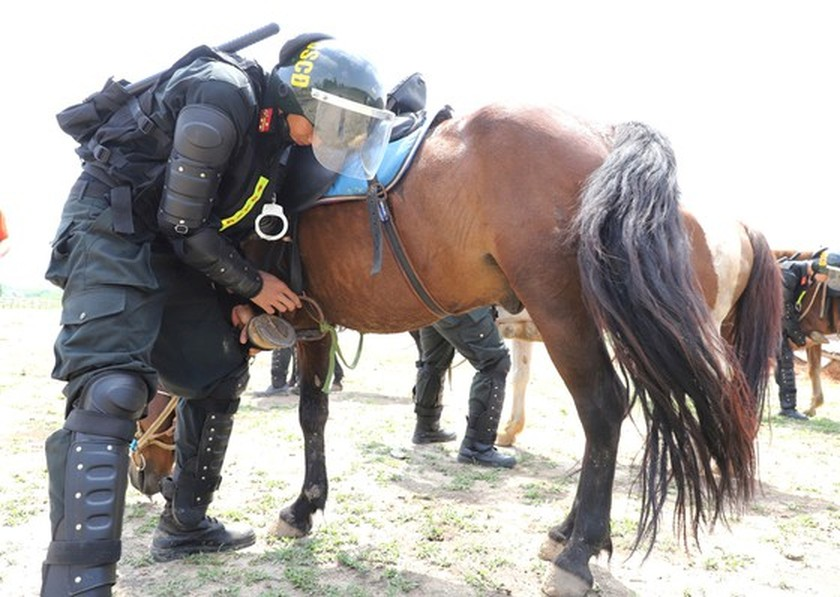 Horse-training day of Cavalry soldiers at Ba Van horse farm ảnh 3