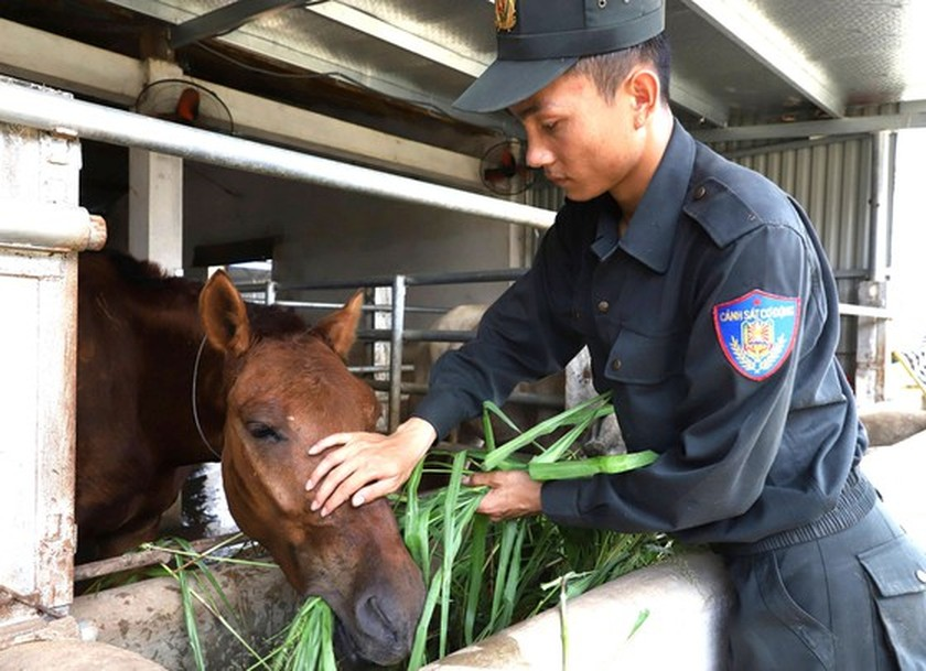 Horse-training day of Cavalry soldiers at Ba Van horse farm ảnh 5